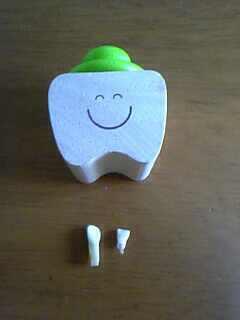 次男の乳歯
